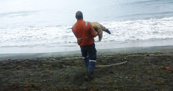 Πολλά μπράβο! Αγοράζει θαλάσσιες χελώνες από καταστήματα τροφίμων και τις επιστρέφει στη θάλασσα!!