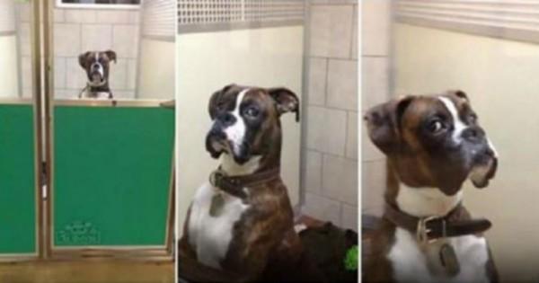 Βίντεο: Το βλέμμα αυτού του σκύλου που πήγε στον κτηνίατρο τα λέει όλα
