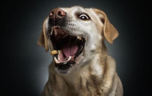 Αυτά τα τρόφιμα είναι θανατηφόρα για τους σκύλους