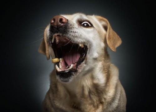 τρόφιμα Σκύλος σκύλοι θανατηφόρα τρόφιμα