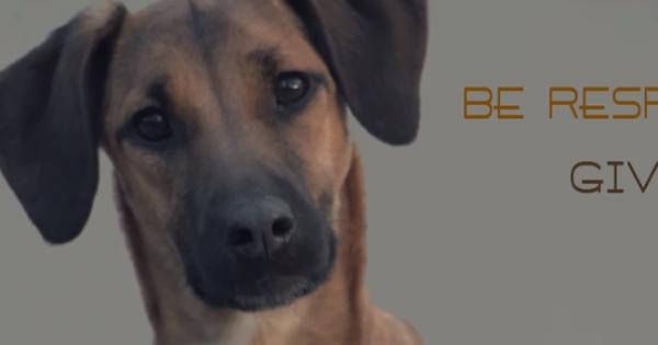 Αυτό το βίντεο ΠΡΕΠΕΙ να το δουν όσοι έχουν σκύλο! (και όχι μόνο)