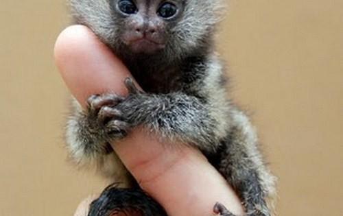 Αυτό δεν το έχετε δει ξανά: Μαϊμούδες του… δαχτύλου!