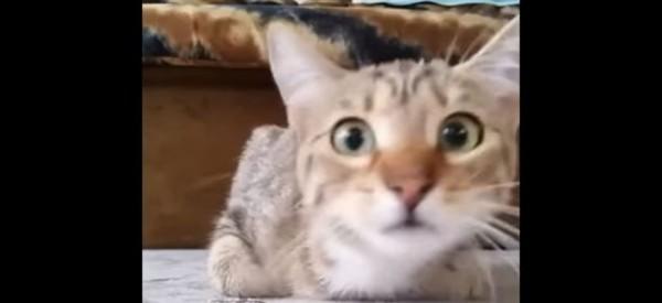 Πολύ γέλιο: Μια γάτα βλέπει ταινία τρόμου