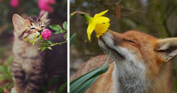 Οι πιο γλυκές φωτογραφίες της μέρας: αξιολάτρευτα ζωάκια μυρίζουν λουλούδια!