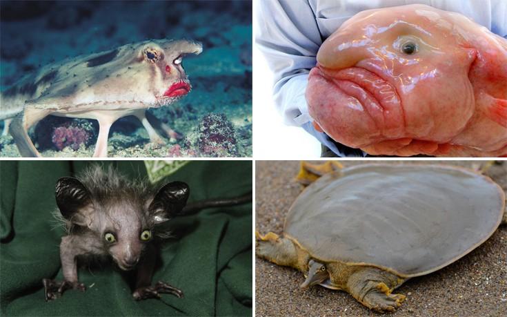 περίεργα ζώα