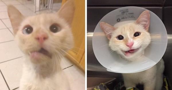 Έσωσαν αυτή τη γάτα και μετέτρεψαν το σπασμένο σαγόνι της σε ένα υπέροχο χαμόγελο!