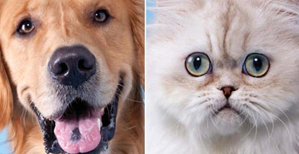 Η αιώνια μάχη: Γάτα VS Σκύλος! Εσείς ποιο ζωάκι προτιμάτε;