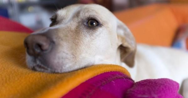 Οι 5 χρυσοί κανόνες για την υιοθεσία ενήλικου σκύλου