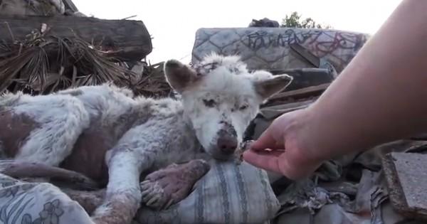 Αδέσποτος σκύλος σώζεται και με τη σειρά του αλλάζει τη ζωή από έναν άλλο σκύλο! (Βίντεο)
