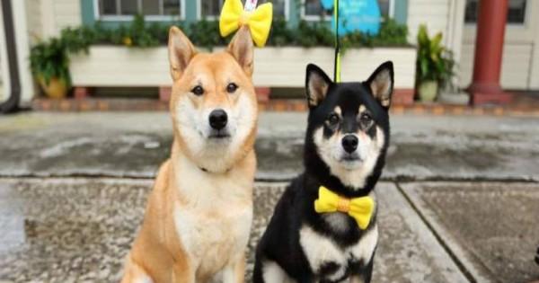 Φορέστε στο σκύλο σας κίτρινη κορδέλα αν δεν θέλετε να το χαϊδεύουν οι περαστικοί (φωτό)