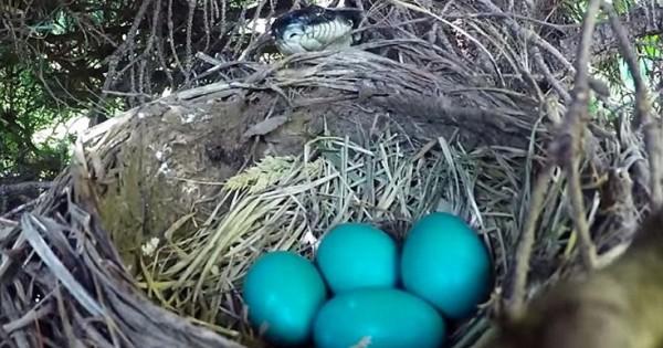 Έβαλε κάμερα στο δέντρο για να καταγράψει τη γέννηση νεοσσών αλλά να τι συνέβη