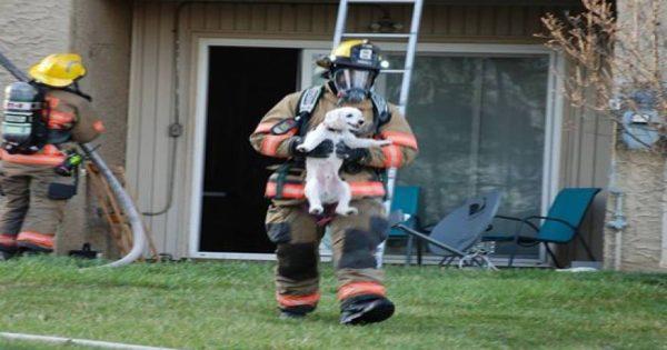 ΗΠΑ: Η χαρά ενός κουταβιού που έσωσαν οι πυροσβέστες από φλεγόμενο διαμέρισμα [φωτό]