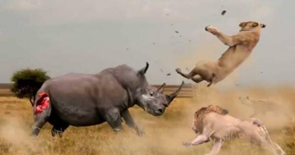Εντυπωσιακές μάχες του ζωικού βασιλείου (βίντεο)