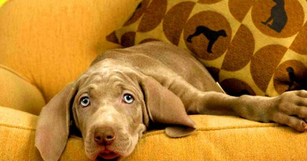 Ο σκύλος μου μαδάει! Πώς μπορώ να περιορίσω την τριχόπτωση;