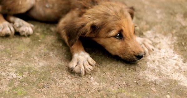 Αυτός ο σκύλος σώθηκε από βέβαιο θάνατο. Δείτε την συνέχεια… [βίντεο]
