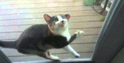 Γνωρίστε τις πιο άτακτες γάτες!