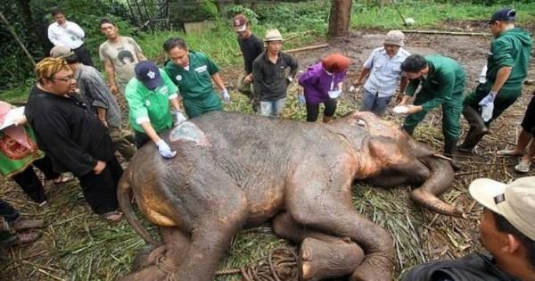 Το τελευταίο δάκρυ του ετοιμοθάνατου ελέφαντα