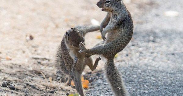 Το Κουνγκ Φου των σκίουρων (Απολαυστικές φωτογραφίες)
