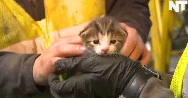 Γατάκι σώθηκε λίγο πριν πολτοποιηθεί σε χωματερή! [video]