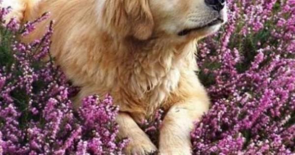 Μύθοι σχετικά με την συμπεριφορά των ζώων