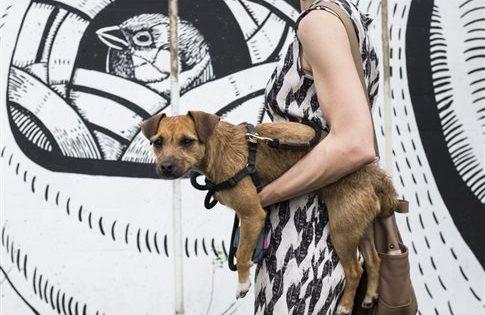 Σκύλος μόνος στο σπίτι: 5 κανόνες πειθαρχίας
