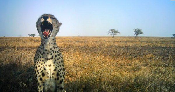 Οι φανταστικές selfies των άγριων ζώων της Τανζανίας