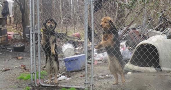 Δυο σκύλοι αδελφάκια συναντιούνται ένα χρόνο μετά την απελευθέρωσή τους!