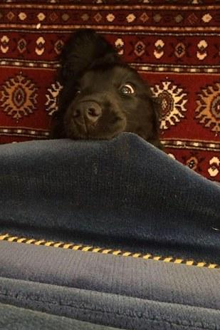σκυλάκια καναπές