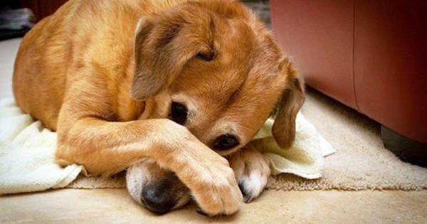 Συμπτώματα Σκύλος κτηνίατρος
