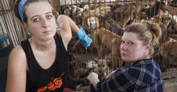 «Οι Άγγελοι του Yulin»: Δύο γυναίκες έσωσαν 1.000 σκυλιά από σφαγή (εικόνες, video)
