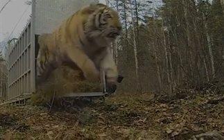 Η πρώτη επαφή των ζώων με τη φύση (βίντεο)