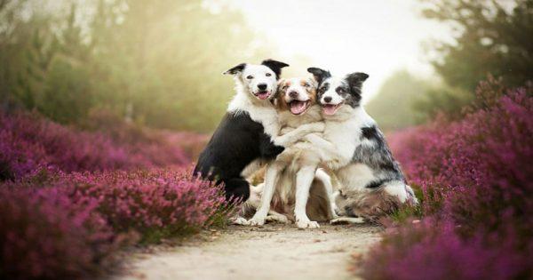 Οι ωραιότερες φωτογραφίες σκύλων που είδατε ποτέ