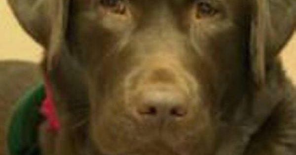 Ο σκύλος που θεραπεύει τον ανθρώπινο πόνο! (βίντεο)