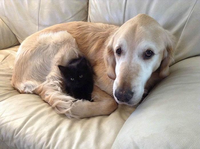 Σκύλος Καρκίνος Γάτα