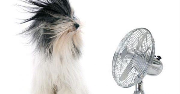 Πώς θα αποφύγω να πάθει θερμοπληξία ο σκύλος μου;