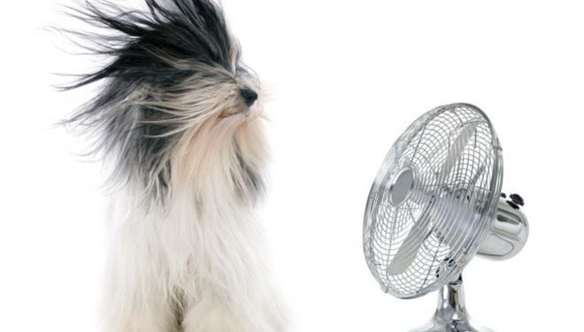 Σκύλος θερμοπληξία