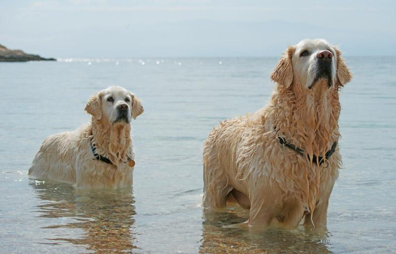 Σκυλιά και θάλασσα σκυλιά θάλασσα