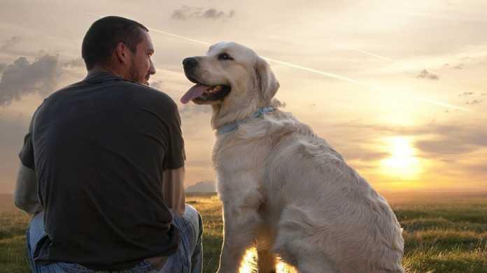 Σκύλος μίμηση των εκφράσεων ανθρώπινο χαρακτηριστικό