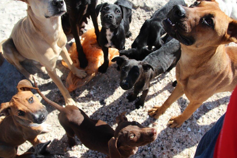 αδέσποτα σκυλιά