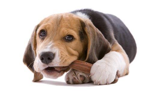 Το μάσημα κάνει το σκυλί σας ευτυχισμένο