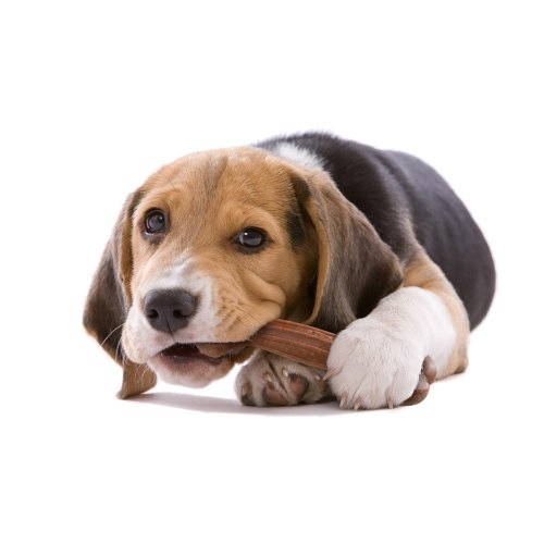 Σκύλος μάσημα