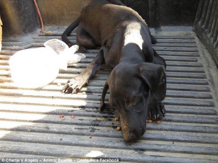 διάσωση σκύλου Αδέσποτος σκύλος