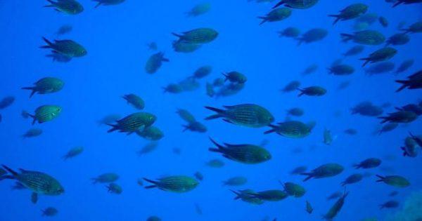 Τα ψάρια μπορούν να αναγνωρίσουν τα ανθρώπινα πρόσωπα!
