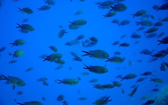 ψάρια ανθρώπινα πρόσωπα