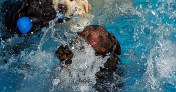 Πες μου τη φυλή του σκύλου σου να σου πω αν κολυμπάει!