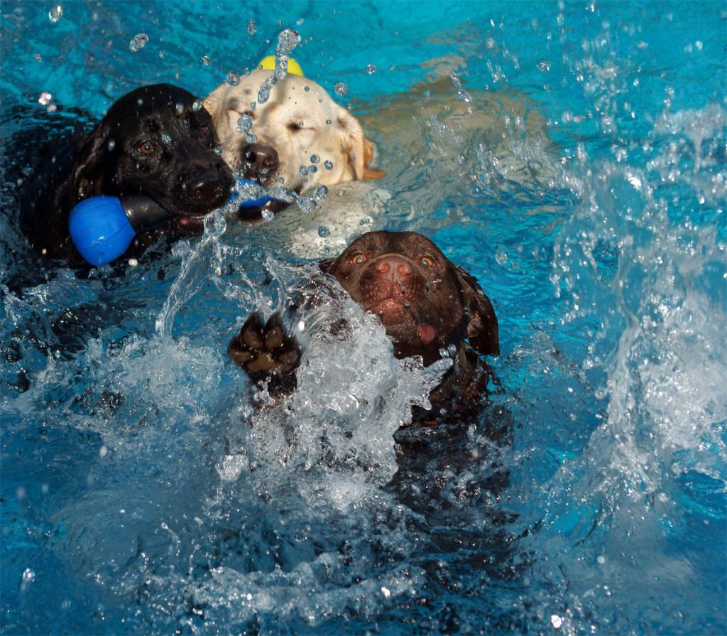 σκύλος και κολύμπι Σκύλος