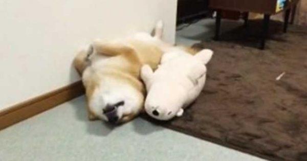 Θα ξετρελαθείτε! Σκυλάκι κοιμάται παρέα με ένα λούτρινο αρκουδάκι!