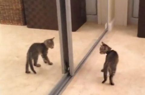 Τρελό γέλιο: Γατάκι βλέπει για πρώτη φορά έναν καθρέφτη