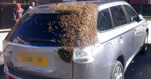 Απίστευτο περιστατικό: Σμήνος μελισσών κυνηγούσε ένα ΙΧ για 2 μέρες!