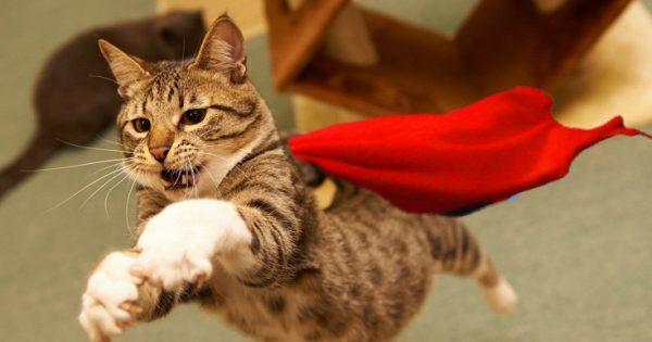 Απίθανες γάτες-σούπερ ήρωες